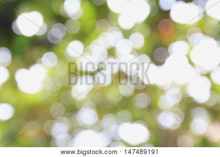 Beautiful nature green bokeh background - Abstract nature bokeh