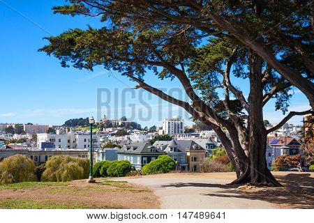 San Francisco California the colored traditional houses of Alamo square seen from the park