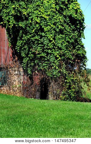 Small arched doorway seems to be a secret entrance. It is overgrown with ivy.