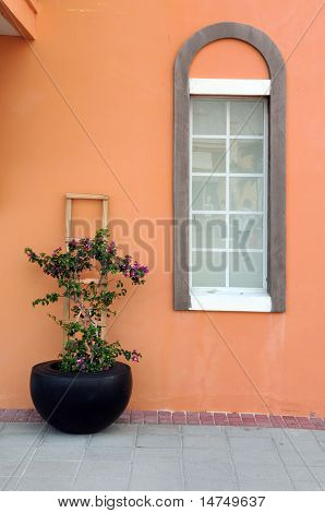 Colorful pot with buganbilia flowers and window in the Caicos Islands, British West Indies