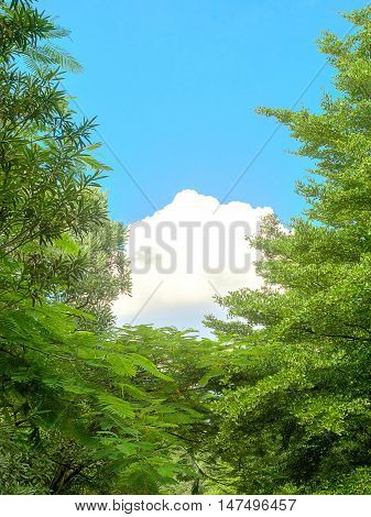 Green treetops with white clouds on bright blue sky background.