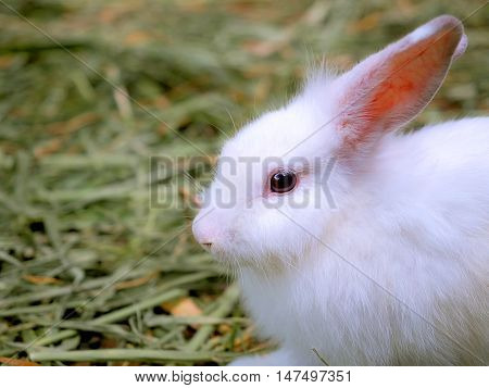 Baby white rabbit in grass with nature blurred background