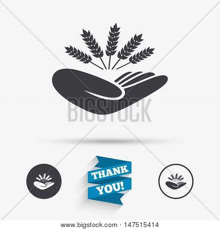 Agriculture insurance sign icon. Hand holds wheat. Protection against crop failure and drought. Flat icons. Buttons with icons. Thank you ribbon. Vector