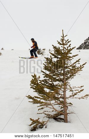 Skier Making Touring Ski Between Pine Trees
