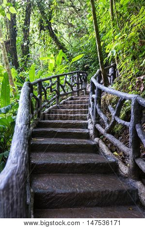 Nature Trail In Costa Rica
