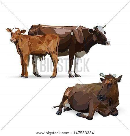 Cow Calf brown, vector painting, looking, domestic, anim, nature, animal