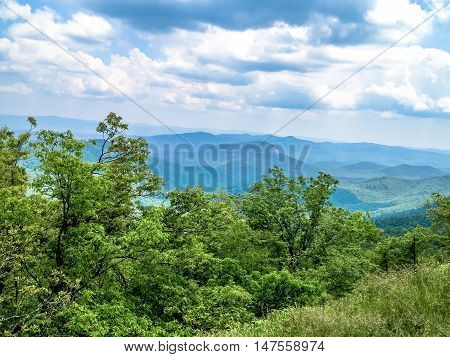 lush foliage in front of a blue mountain range