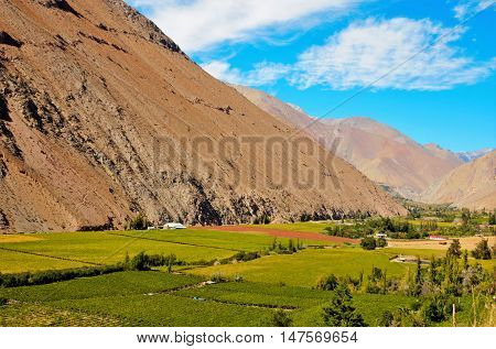 Long shot of fields of pisco plantations in the middle of hills in the Elqui Valley in Chile, South America