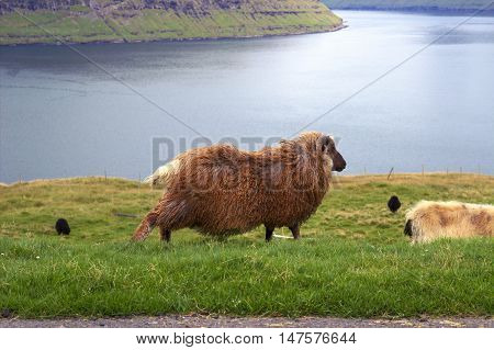 Wildlife from the Faroe Islands in the north Atlantic