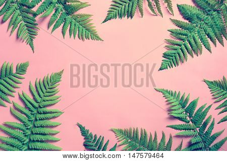 Tropical summer background fern leaves set in the frame around blank space for a text flat lay view from above stylized photo