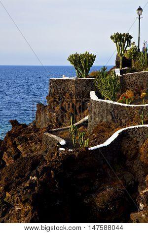 Cactus Street Lamp Chain  Coastline Lanzarote
