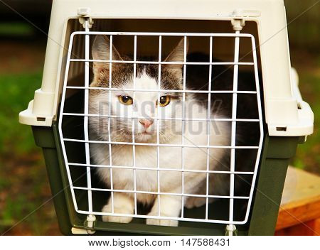 male cat in the cat carrier close up photo