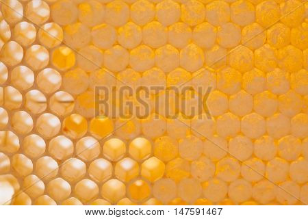 Natural honeycomb closeup. Unfinished yellow honey comb. texture. honey cells photography.