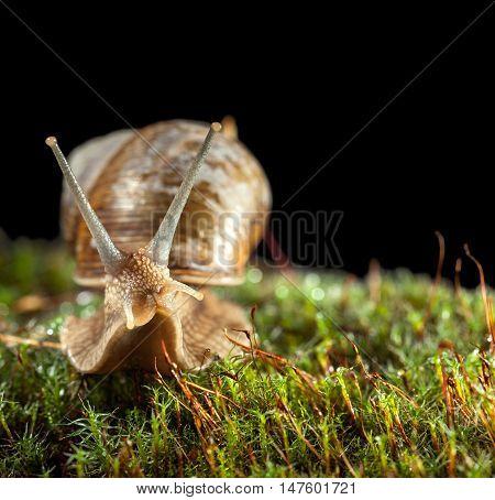 Snail Portrait