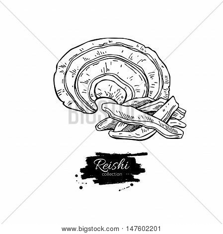 Reishi mushroom vector superfood drawing. Isolated hand drawn  illustration on white background. Organic healthy food. Great for banner, poster, label, sign