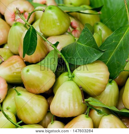 green rose apple (chomphu) fruit and leaf on background