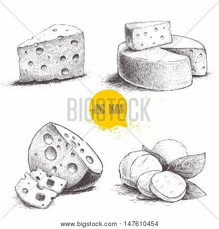 Hand drawn different type of cheese set. Edam mozzarella cheese with basil leafs round cheese head triangle of cheese. Vector organic food illustration. Vintage design.