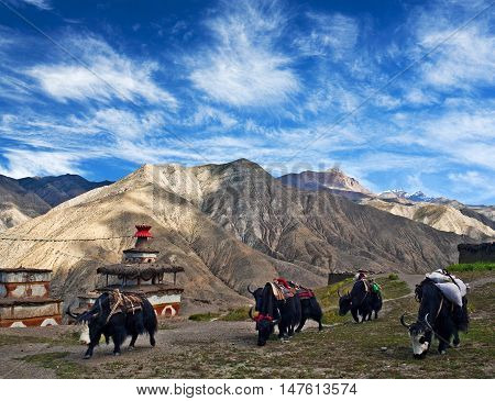 Caravan of yaks crossing in the Nepal Himalayas, Nepal