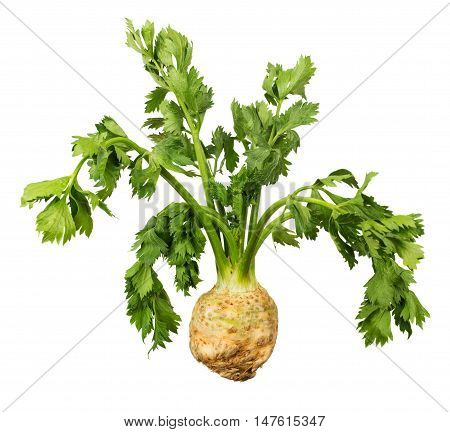 Celery root with green leaves isolated on white background