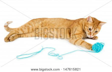 Red cat playing with wool ball isolated on white background