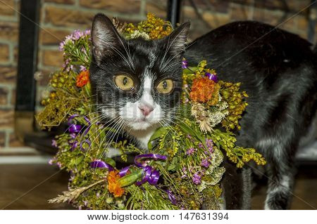 Black and white kitten with wreath of flowers