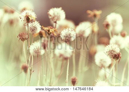 Autumnal meadow flowers (nature background)