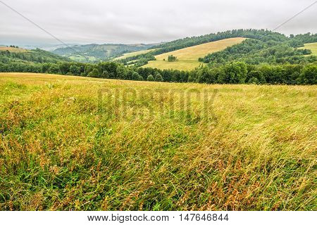 Rural Field Near Forest At Hillside