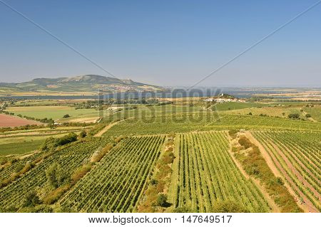 Vineyards under Palava. Czech Republic - South Moravian Region wine region.
