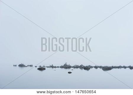 Rocky beach great black cormorant seagulls and morning fog in summer. Sea mist birds coast seaside natural environment. Phalacrocorax carbo on the shore Koipsi Island Estonia Europe.