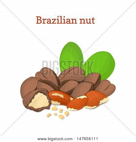 Brazilian nuts. Vector illustration of a handful of nut peeled nuts and in shell, leaves isolated on white background it can be used as packaging design element, printing brochures on healthy, diet