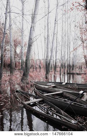 Park of Ois da ribeira pateira de Fermentelos