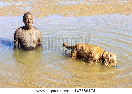 CROSBY BEACH, ENGLAND - SEPTEMBER 13: Detail of Another Place by Antony Gormley consists of 100 cast-iron, life-size figures spread out along three kilometres of the foreshore near Liverpool on August 13, 2016.