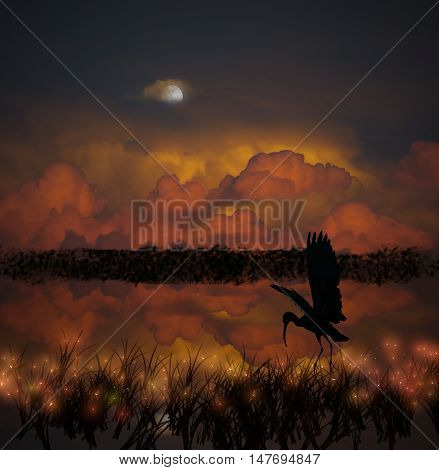Blue Heron hunting insects and fish at night