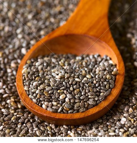 Healthy chia seeds (lat. Salvia hispanica) on wooden spoon photographed with natural light (Selective Focus Focus one third into the chia seeds on the spoon)