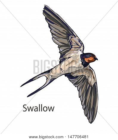 Swallow vector, vector illustration isolated birds. birds flying, animals, bird silhouette, bird vector