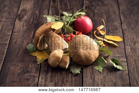 Wild edible cep mushrooms on wooden table rustic style