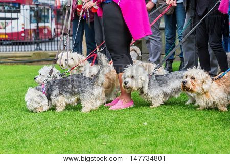 Owner Meeting Of The Dandie Dinmont Terrier