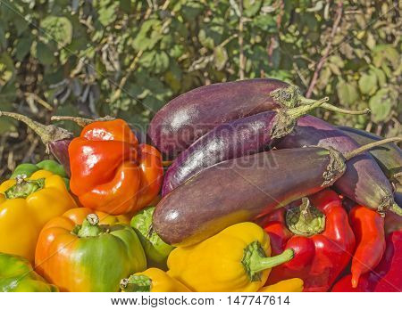 Green  Yellow And Red Pepper  Eggplants