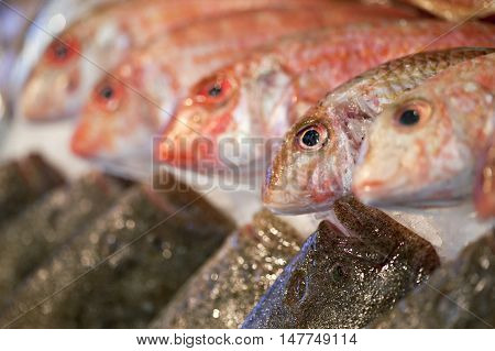 Close Up Of Fishes