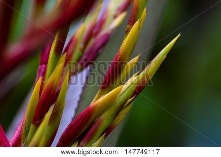 Tropical Plants In Costa Rica