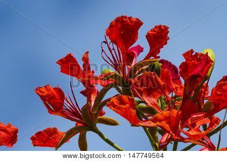 Tropical Wild Flowers