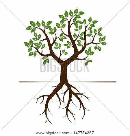 Green Tree and Roots. Vector Illustration. Nature and Garden.