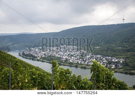 Famous German Wine Region Moselle River in Winningen