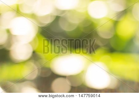 green blurred of nature background. Blurred park, natural background.