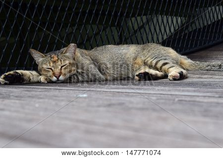 A cat lazing outdoor under the sun