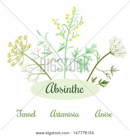 Absinthe ingredients. Grand wormwood or Artemisia absinthium , green anise or Pimpinella anisum, sweet fennel or Foeniculum vulgare. Vector illustration.