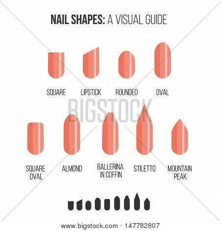Nail shapes. Visual guide in minimalism style.