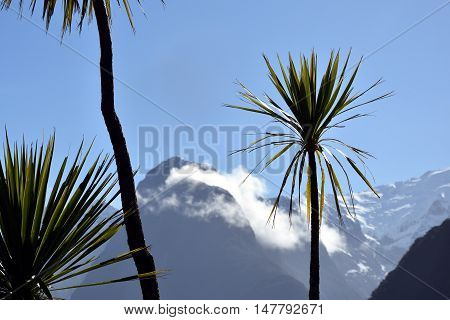 Palm trees at Milford Sound. Mitre Peak (Fiordland New Zealand) in the background.