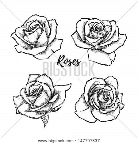 Hand Drawn Vector Illustration - Set Of Roses. Floral Tattoo Sketch. Perfect For Tattooing, Invitati