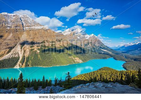 Canada. Turquoise Lake Peyto in Banff National Park. Mountain Lake as a